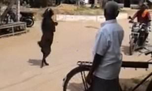 Goat Shuts Down Internet For Walking On Two Legs Like a Human -[WATCH VIDEO]